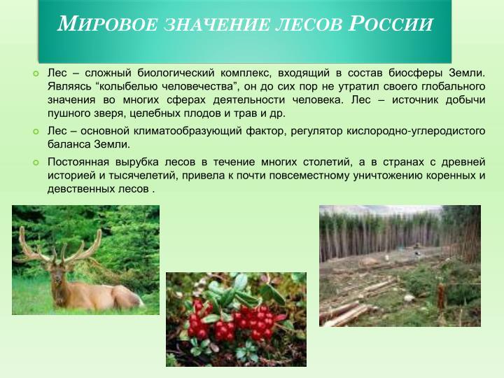 Мировое значение лесов России