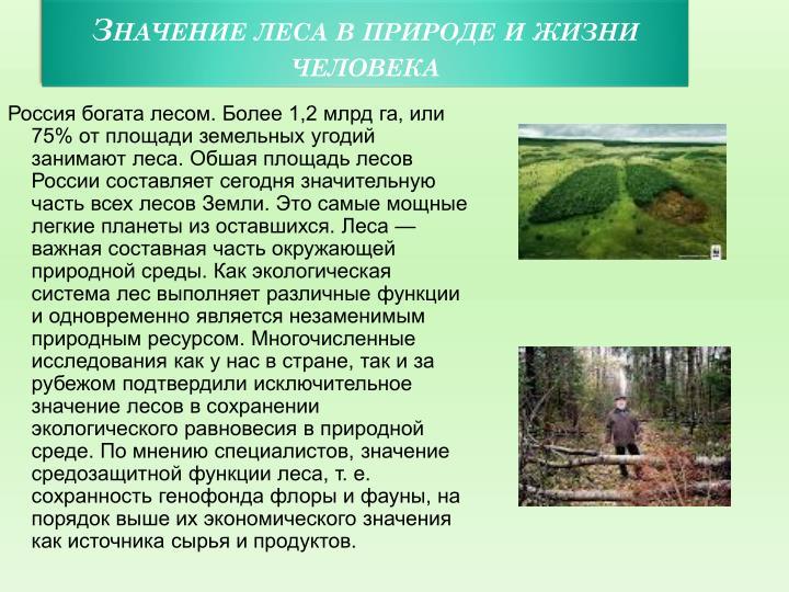 Значение леса в природе и жизни человека