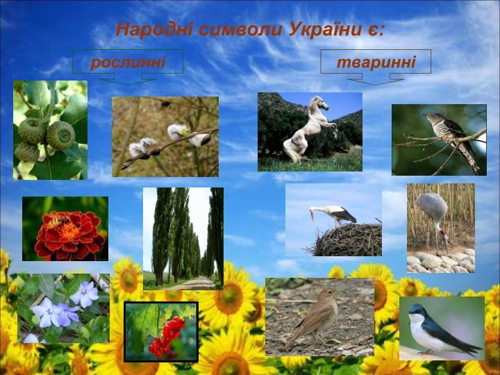 Народні символи України є: