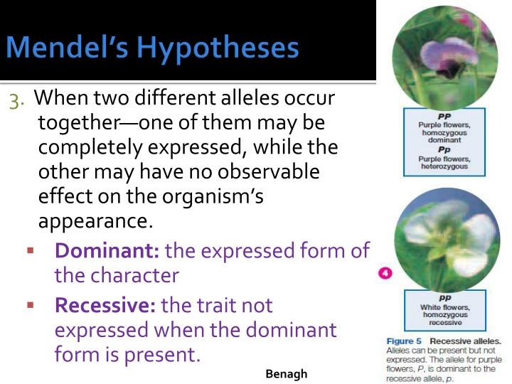 Mendel's Hypotheses