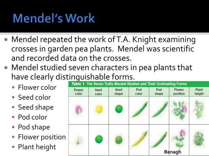 Mendel's Work