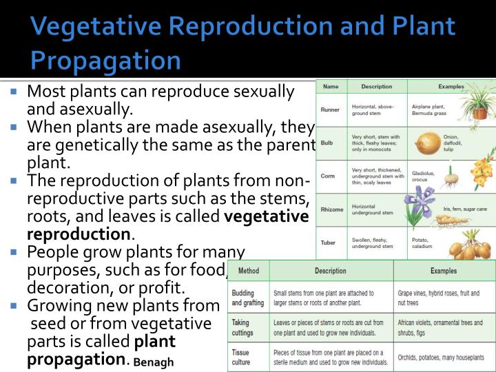 Vegetative Reproduction and Plant Propagation