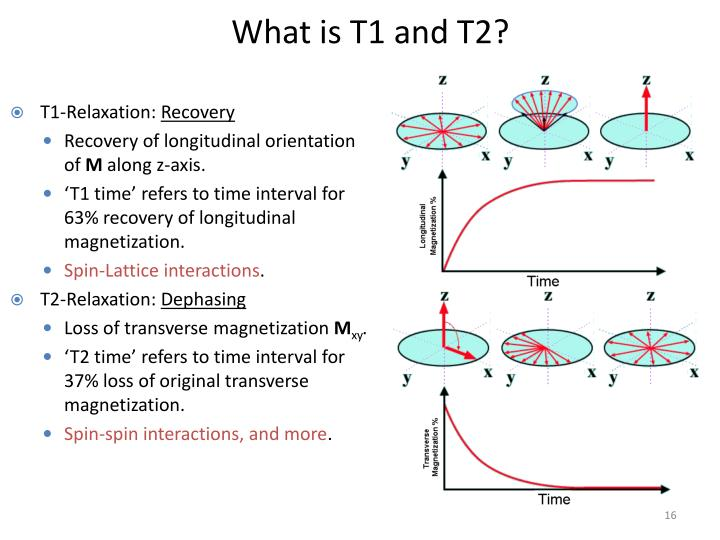 What is T1 and T2?