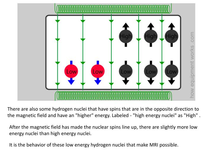 There are also some hydrogen nuclei that have spins that are in the opposite direction to the magnetic