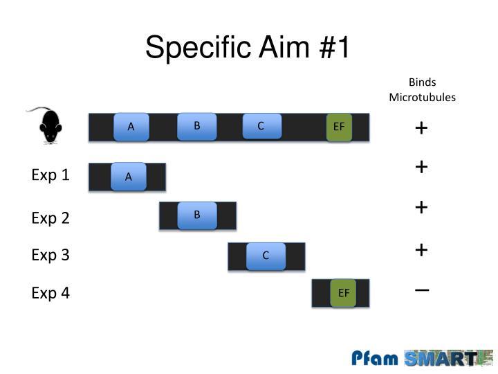 Specific Aim #1