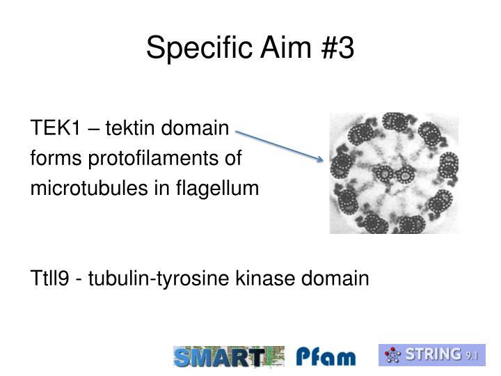 Specific Aim #3