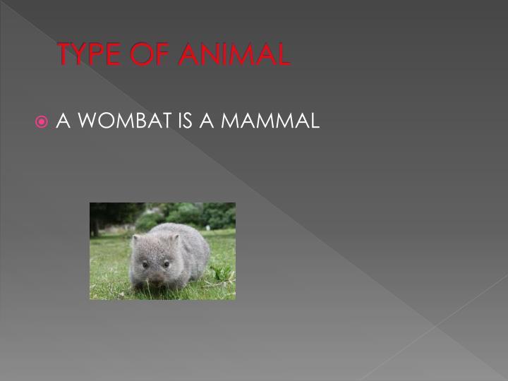 TYPE OF ANIMAL