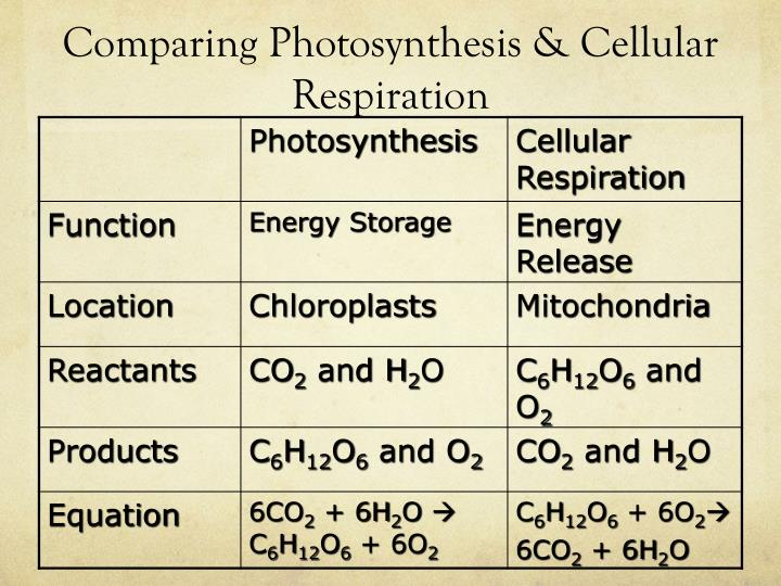 Comparing Photosynthesis &