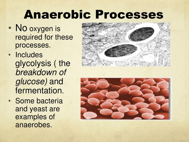 Anaerobic Processes
