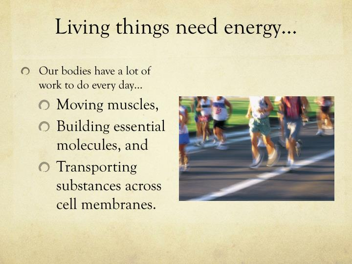 Living things need energy…