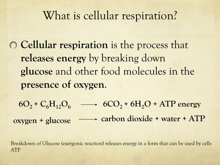 What is cellular respiration?