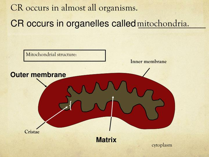 CR occurs in almost all organisms.