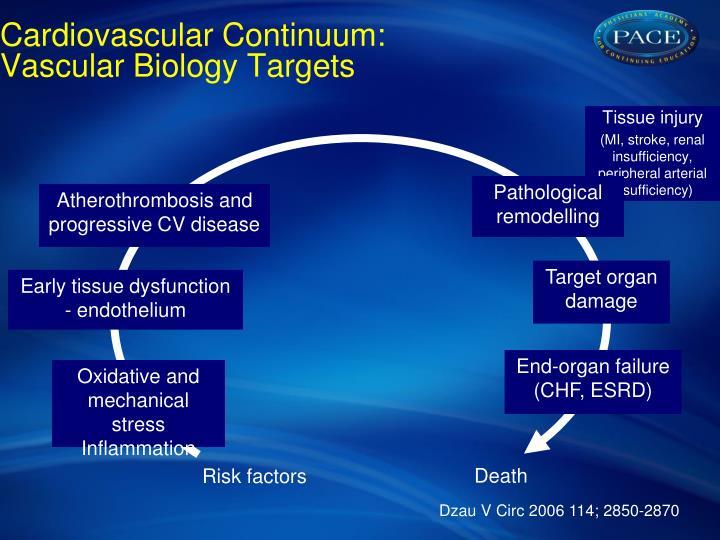 Cardiovascular Continuum: