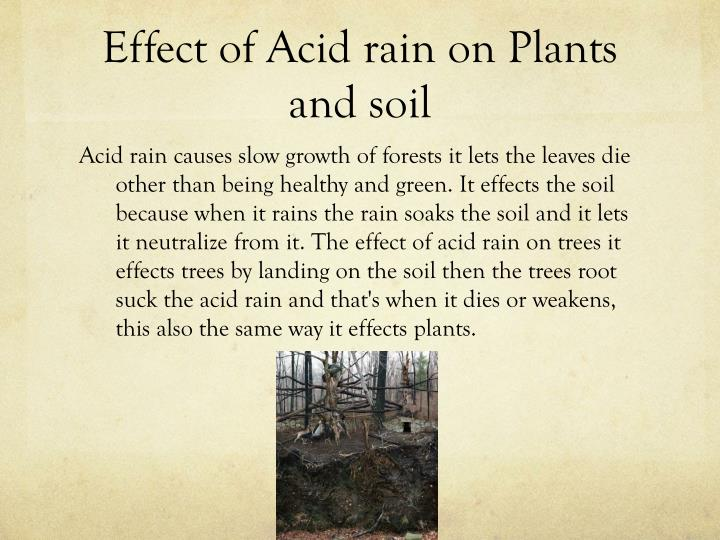 the effect of soil ph on Soil acidity and alkalinity are measured in units of ph the ph scale is from 0 ( most acid) to 14  soil ph effect on availability of soil nutrients soil ph affects  the.