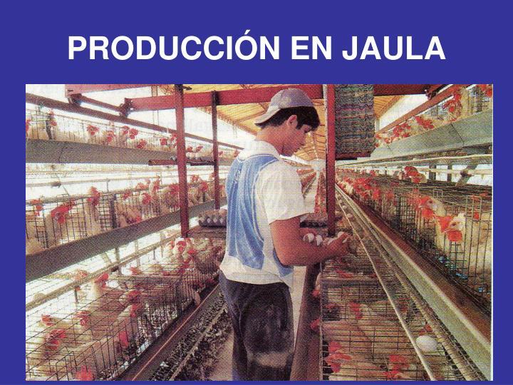 PRODUCCIÓN EN JAULA
