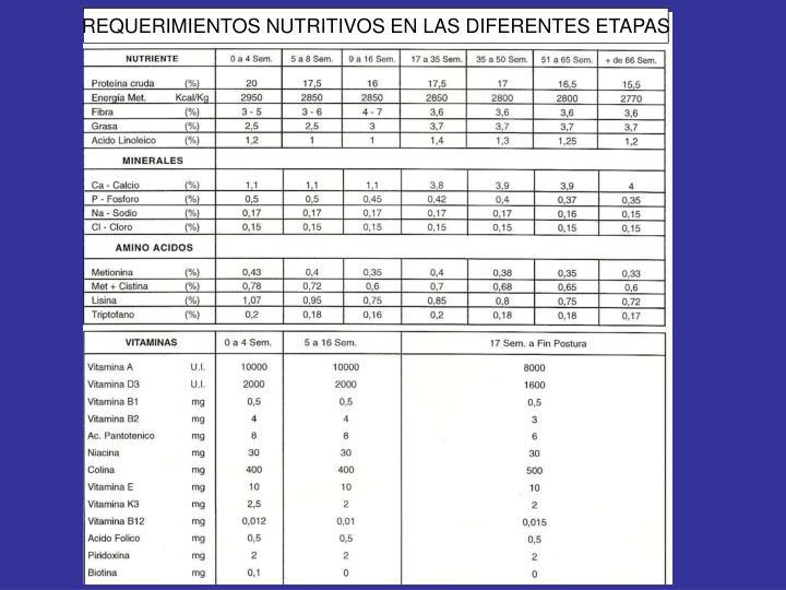 REQUERIMIENTOS NUTRITIVOS EN LAS DIFERENTES ETAPAS