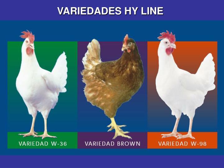 VARIEDADES HY LINE