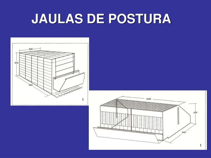 JAULAS DE POSTURA