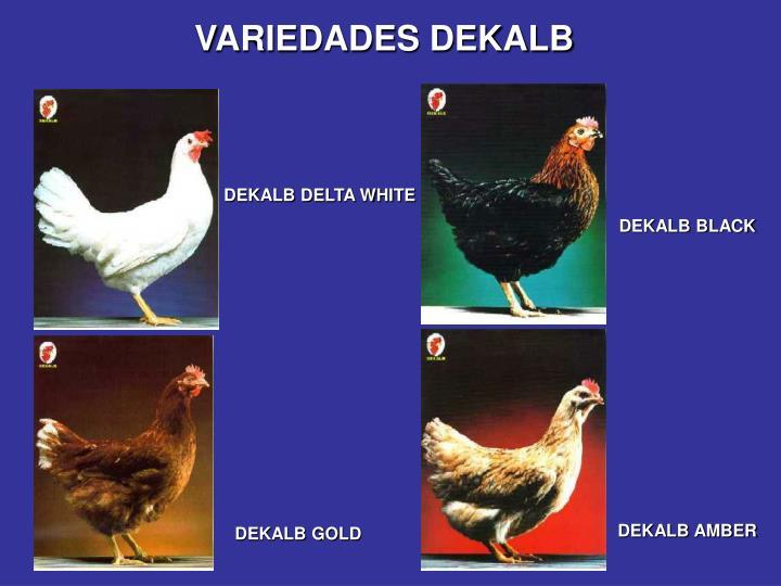 VARIEDADES DEKALB