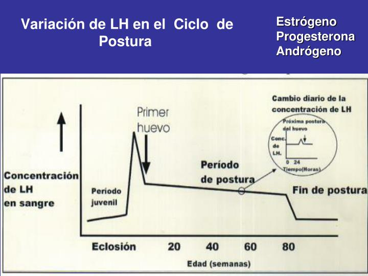 Variación de LH en el  Ciclo  de Postura