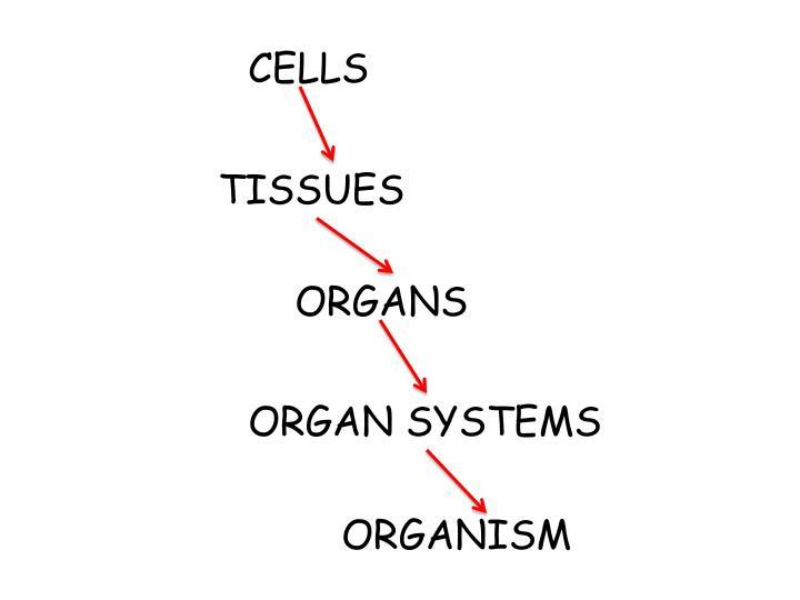 CELLS