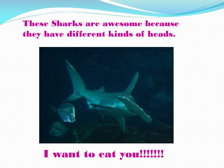 These Sharks are awesome because they have different kinds of heads.