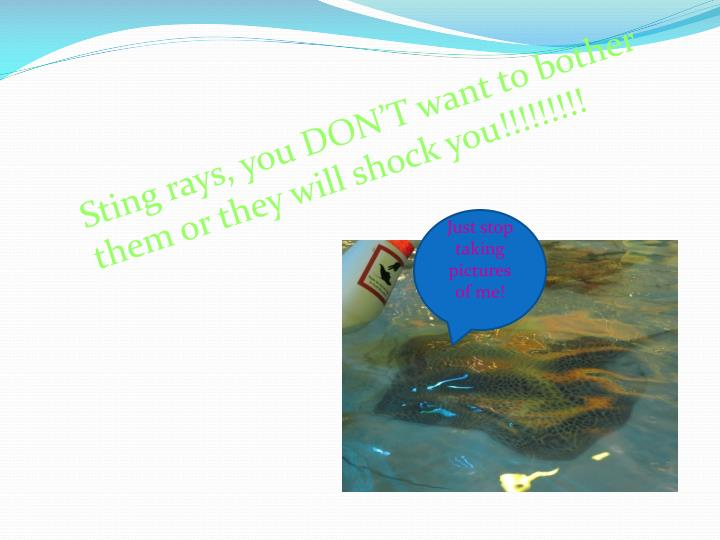 Sting rays, you DON'T want to bother them or they will shock you!!!!!!!!!