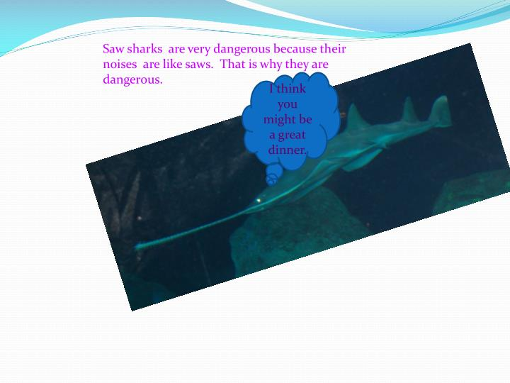 Saw sharks  are very dangerous because their  noises  are like saws.  That is why they are dangerous.