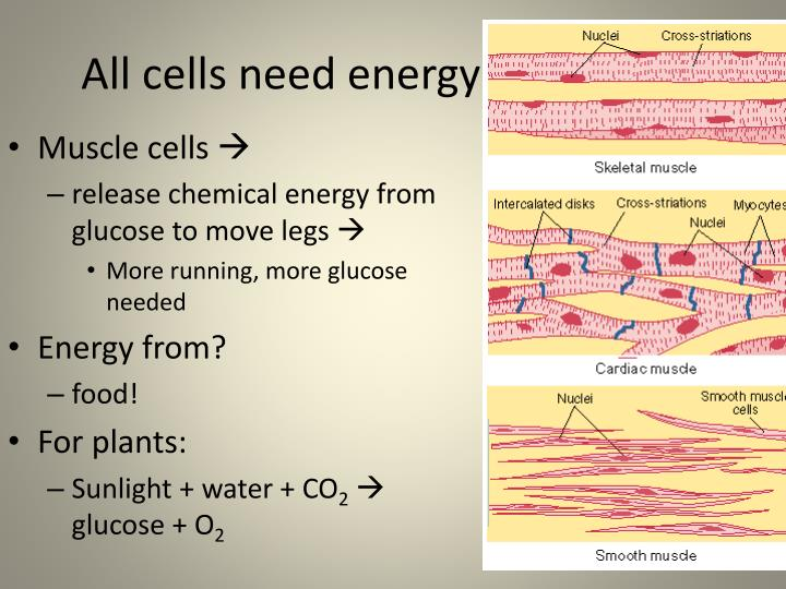 All cells need energy