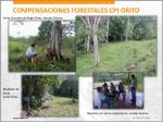 compensaciones forestales cpi orito7