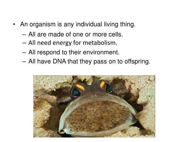 An organism is any individual living thing.
