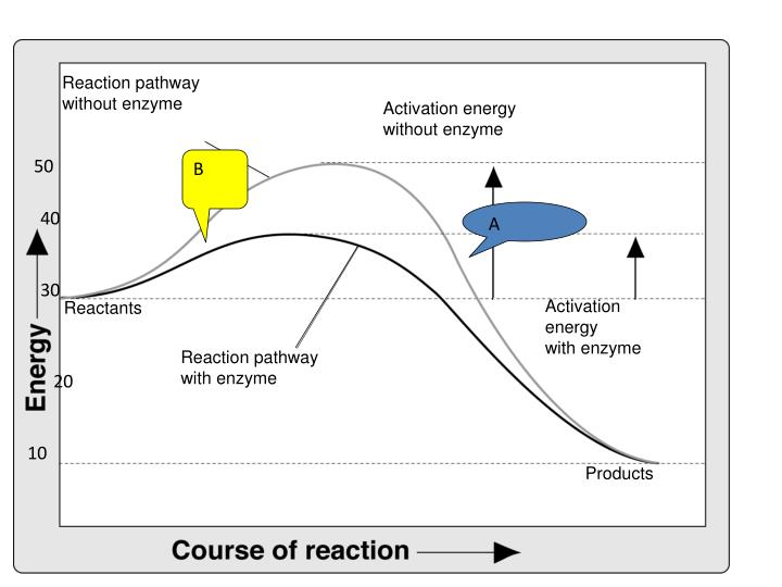 Reaction pathway