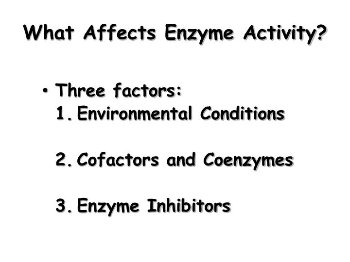 What Affects Enzyme Activity?
