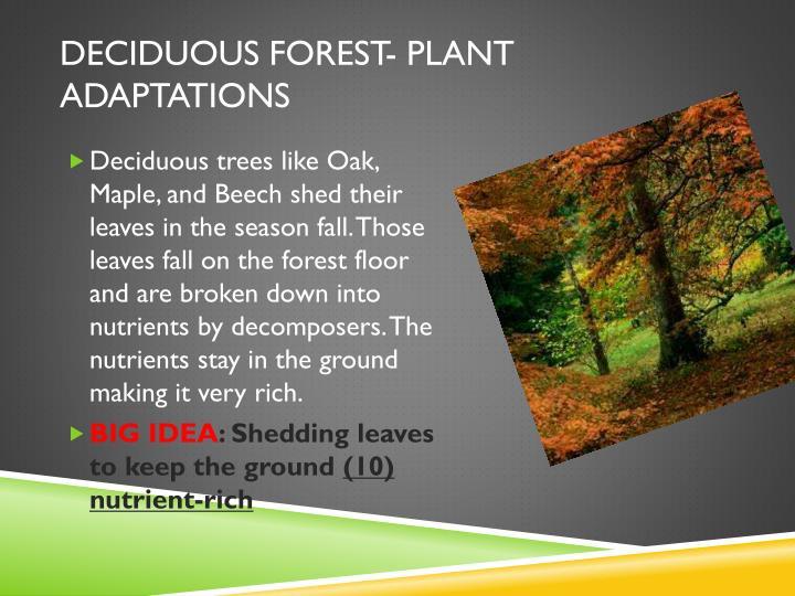 Deciduous forest- Plant adaptations