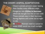 the desert animal adaptations