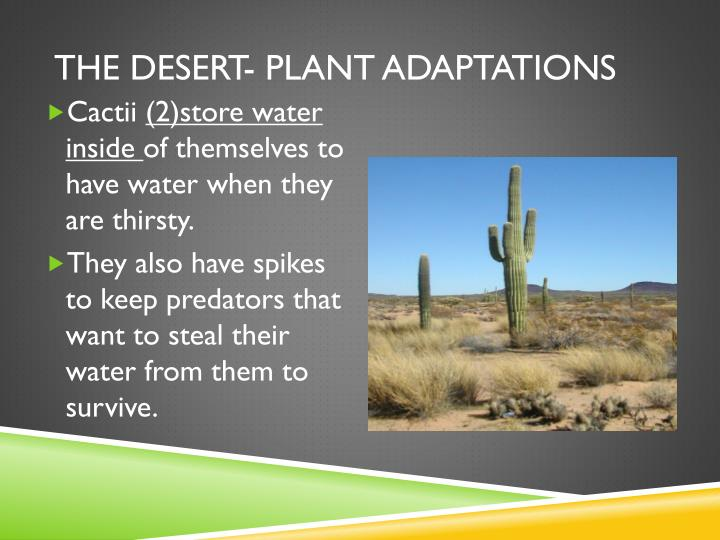 The desert- Plant adaptations