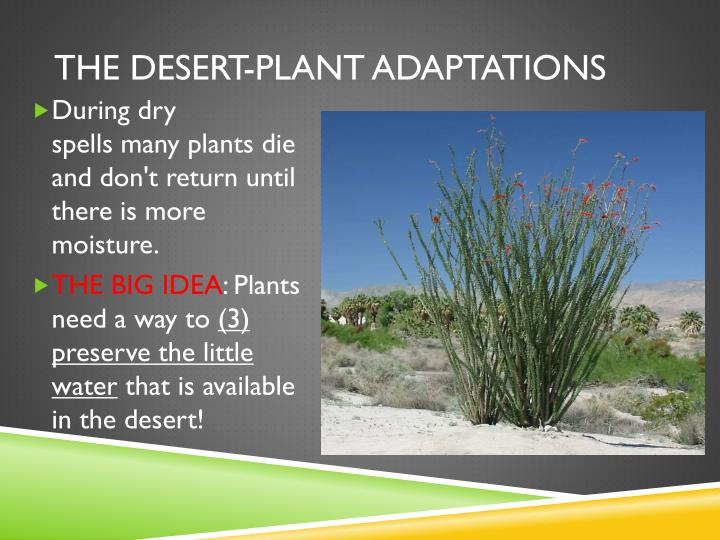 The desert-Plant adaptations