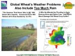 global wheat s weather problems also include too much rain