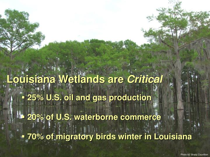 Louisiana Wetlands are