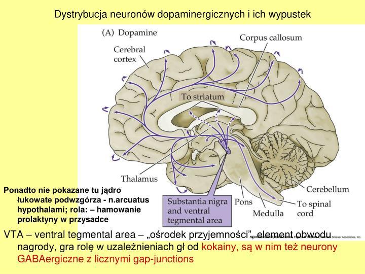 Dystrybucja neuronw dopaminergicznych i ich wypustek