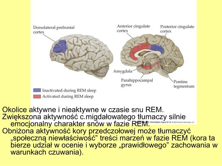 Okolice aktywne i nieaktywne w czasie snu REM.