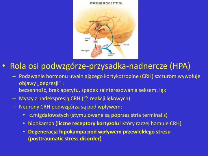 Rola osi podwzgrze-przysadka-nadnercze (HPA)