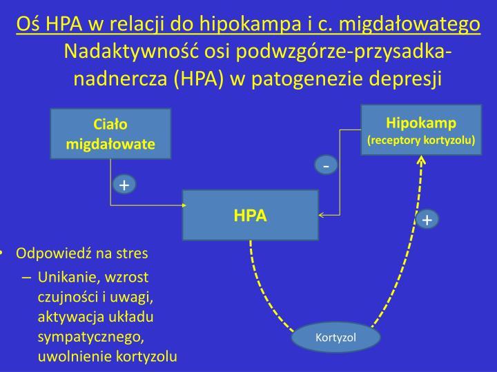 O HPA w relacji do hipokampa i c. migdaowatego