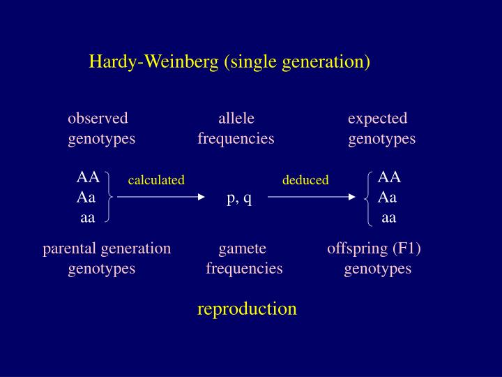 Hardy-Weinberg (single generation)