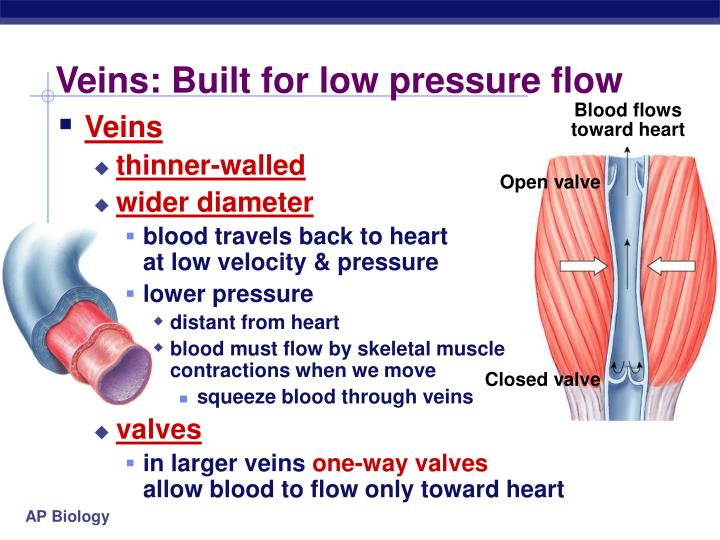 Veins: Built for low pressure flow