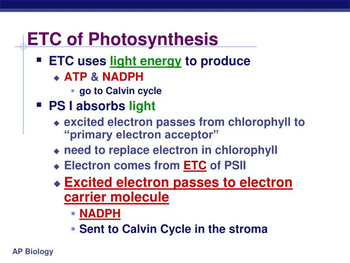 ETC of Photosynthesis