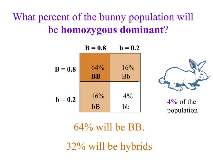 What percent of the bunny population will be