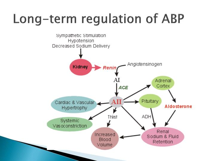 Long-term regulation of ABP