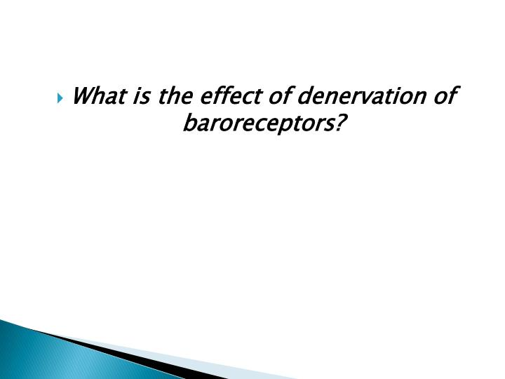 What is the effect of denervation of baroreceptors?