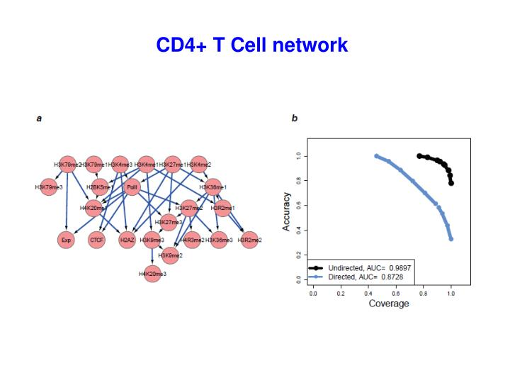 CD4+ T Cell network